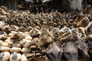 Schaedel auf dem Fetisch Markt in Lome