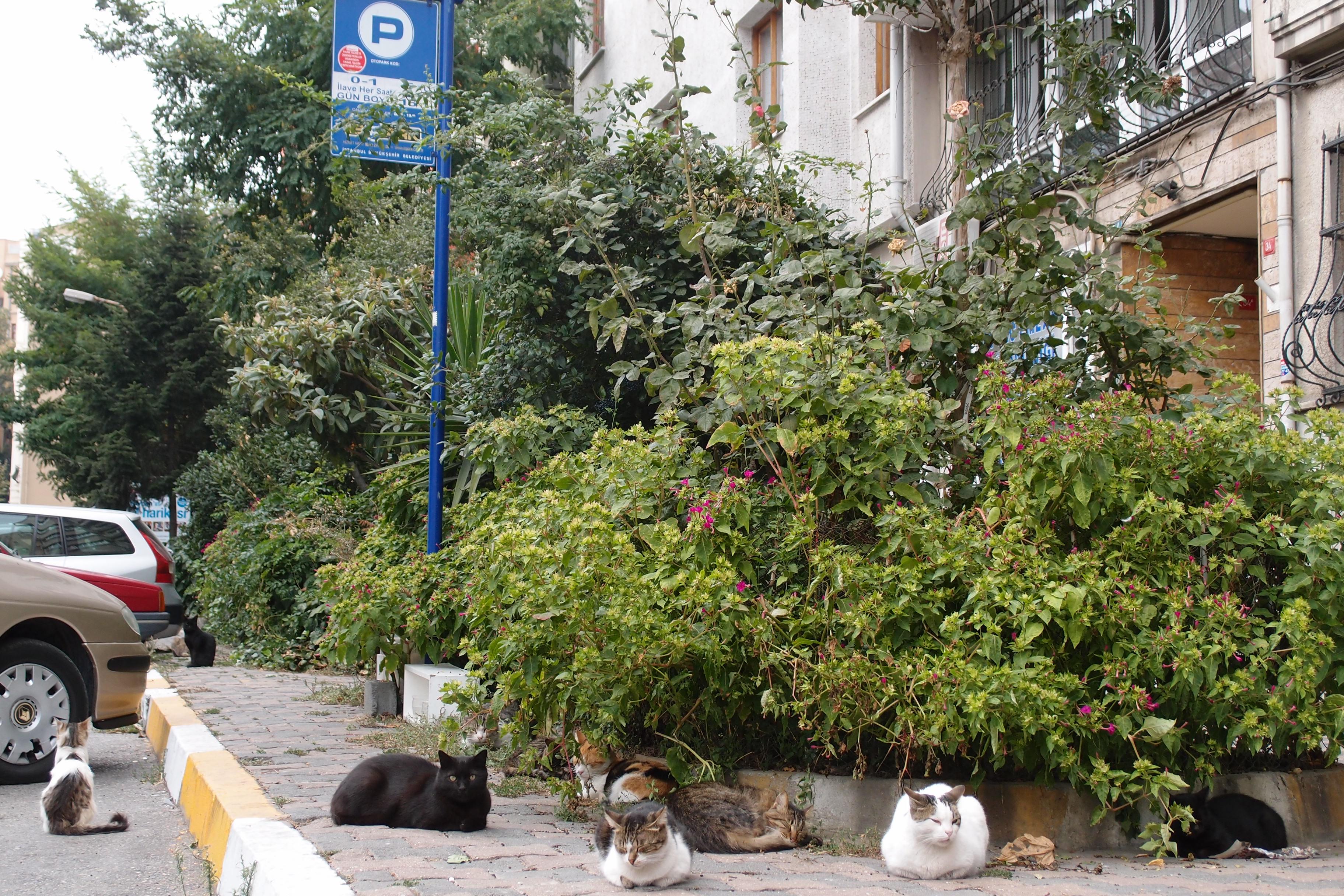 Katzen in Istanbul