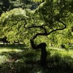Grüne Vielfalft in Georgien