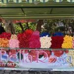 Blumen in Yerevan